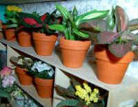 Blattpflanzen